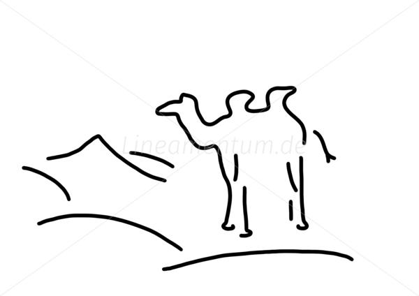 dromedar vs kamel
